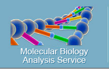 Molecular Biology Analysis Service